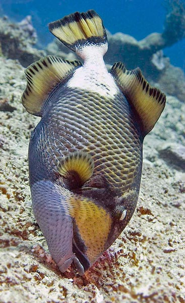 Fish facts 51 facts about fish factslides for Fish swimming backwards
