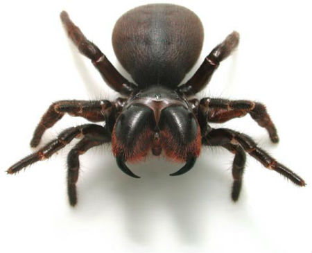 spider facts 24 facts about spiders â factslidesâ