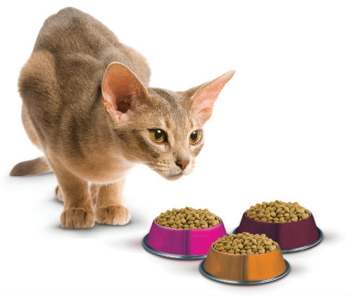 Cat Food For Sick Dogs