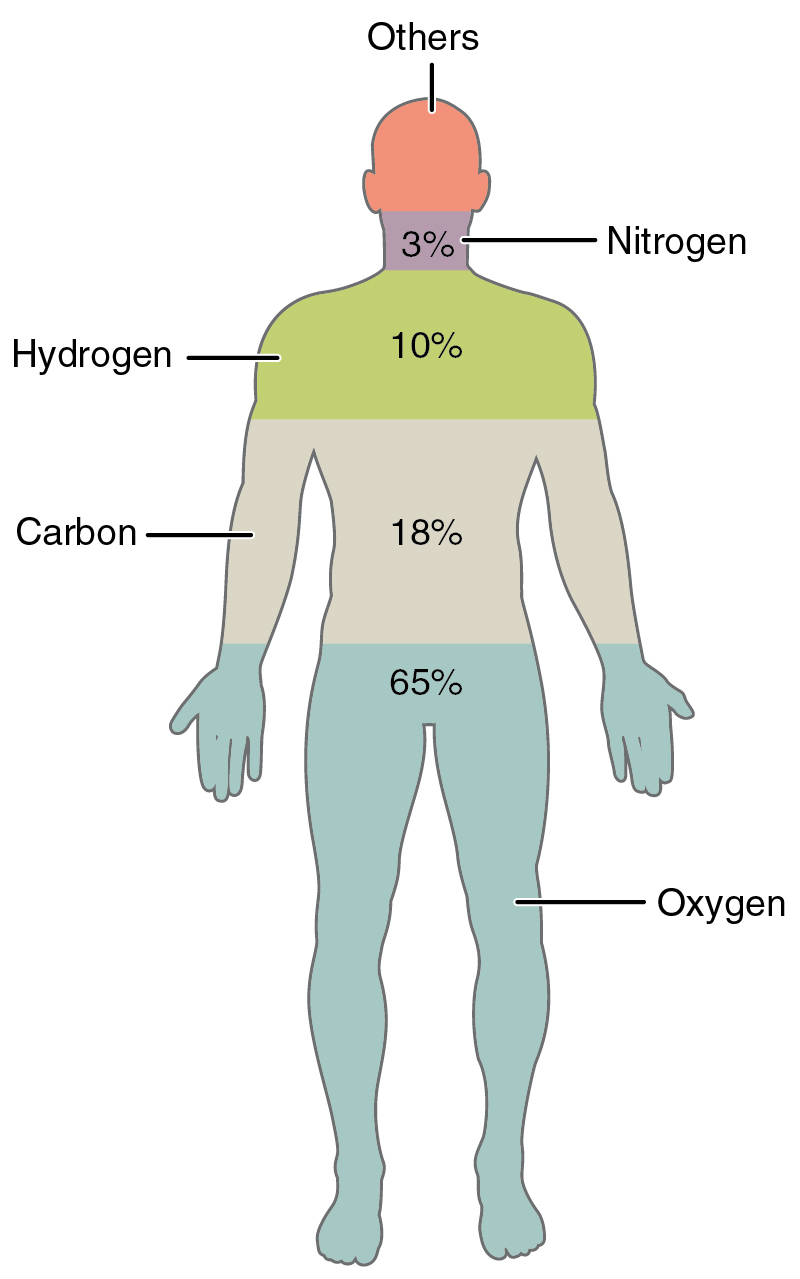 How do scientist carbon dating 6