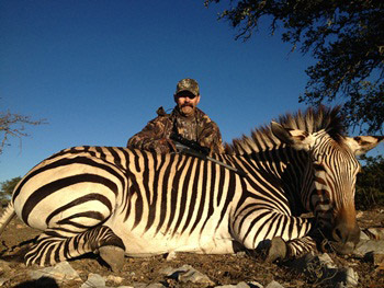 Zebra Facts: 10 Facts about Zebras ←FACTSlides→